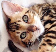 handsome cat !