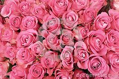 Photo about Background of pink roses in bloom. Image of vivid, blossoming, blossoms - 34705970 Beautiful Bouquet Of Flowers, Beautiful Red Roses, Bouquet Flowers, Rose Flowers, Cheap Flowers, Flowers For You, Flower Delivery Uk, Pink Roses Background, Rose Tumblr