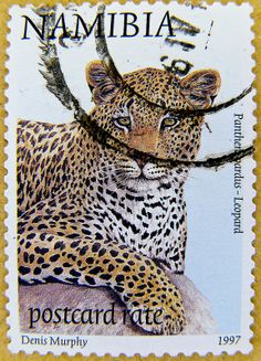 wonderful stamp Namibia postcard rate Leopard (panthera pardus)