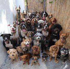 33 собаки, которые сидят смирно и смотрят в камеру — Фото дня, 7 апреля 2015