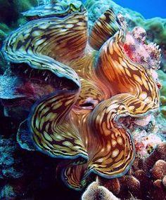 Thailand diving... amazing