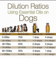 Oil Addicted Mama Essential oil dilution ratio for dogs- please also keep in mind your dogs sensitiv Essential Oils Uses Chart, Essential Oil Carrier Oils, List Of Essential Oils, Funny Boxer, Dog Weight, Extra Virgin Coconut Oil, When You Smile, Beauty Tips For Hair, Bold Lips