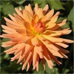TROPIC SUN - Item #409