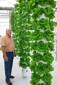 tower garden-I have something like this only shorter, for strawberries, that I will use next year, but I really love these taller towers! what a great use of space. - Gardening Living #hydroponicslettuce #hydroponicgardening