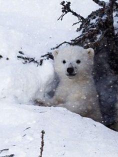 """""""Hallo, hier bin ICH! Gerade rechtzeitig, um die Schneeflocken einzufangen!"""""""