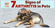 Osteoarthritis is the most common type of arthritis in pets, and treatment for this is focused on alleviating symptoms and slowing down its progression.