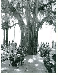 Historic Moana Surfrider - 1930s   It's almost magical being able to still lunch under this tree.