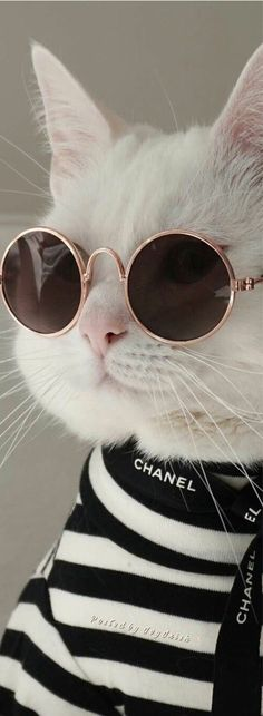 Cute Baby Cats, Cute Cats And Kittens, Cute Little Animals, Cute Funny Animals, Cool Cats, Kittens Cutest, Kitty Cats, Cute Cat Wallpaper, Animal Wallpaper