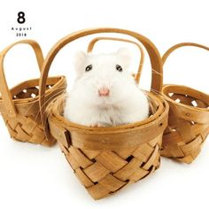 THE HAMSTER Calendar Official Japanese Store Your Content Goes Here