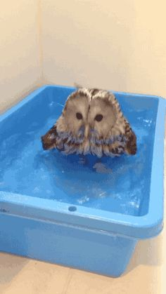 Splish splash, I was takin' a bath...