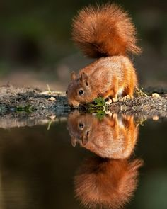 Reflecting Before Taking a Drink.