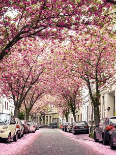 Hello spring! Bonn, Germany