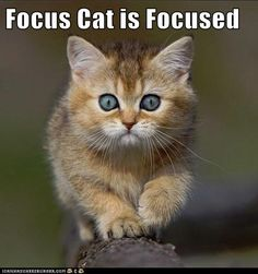 Focus Cat is Focused