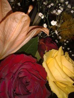 F Reflection, World, Rose, Flowers, Plants, Painting, Art, Art Background, Pink
