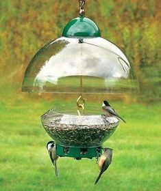 Droll Yankees Big Top Squirrel Proof Bird Feeder Btg