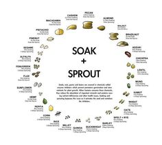 Check out this neat little diagram showing how long each nut, legume and seed should be soaked!    Did you know that most nuts, legumes and grains should be soaked and/or sprouted before eating so they can be easily digested? Without soaking, antinutrients within can inhibit your ability to absorb other nutrients from different foods.