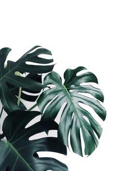 {Printable} 6 posters «jungle» à imprimer!