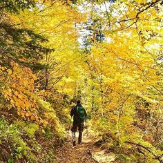 Hiking in the mountains, especially during #fall, is gorgeous. Photo: @adventurousdiego. #hiking #takeahike #smokymountains #fallcolors #travel #explore #getoutside #naturelovers #adventure