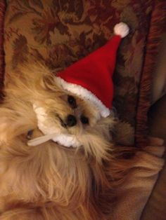 Santa Magic is tired from all the Holiday prep!
