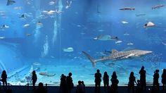 Kuroshio Sea - 2nd largest aquarium tank in the world - (song is Please don't go by Barcelona) on Vimeo
