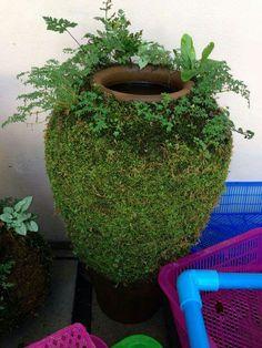 Use a to disturb the to prevent – and ke… - Modern Dream Garden, Garden Art, Garden Plants, Garden Design, Cool Plants, Air Plants, Indoor Plants, Indoor Garden, Outdoor Gardens