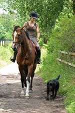 "horses and dogs | Pick a horse that's dog savvy for the first meeting,"" says Pam ..."