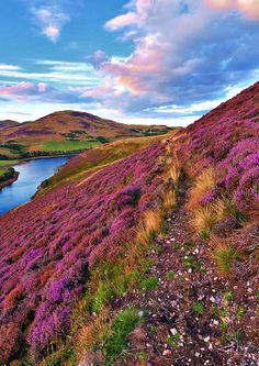 The green valley river mountains in the Pentland Hills covered by violet heather flowers. Click through to see 28 mind blowing photos of Scotland! Places To Travel, Places To See, England And Scotland, England Uk, Scotland Uk, Edinburgh Scotland, Ireland Landscape, Scotland Landscape, Scotland Travel