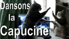 My favorite cat vid - Dansons la capucine