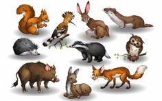какие животные обитают в лесу