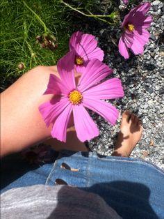Summer flowers 🌸🌺💕
