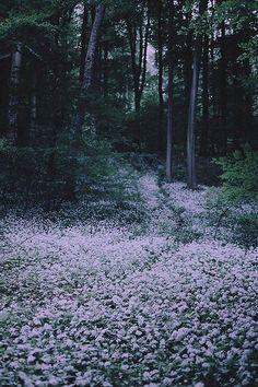 ~Night forest, soft glow~