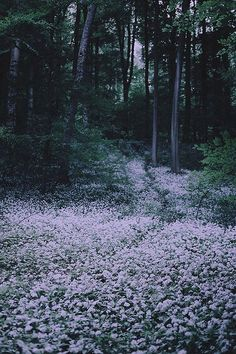 ~Night forest flowers, soft glow~