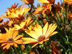 Orange Flowers!!(: