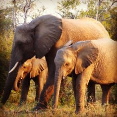 We saw a beautiful elephant herd walking on the side of the road. #Krugerpark #elephants www.outlook.co.za