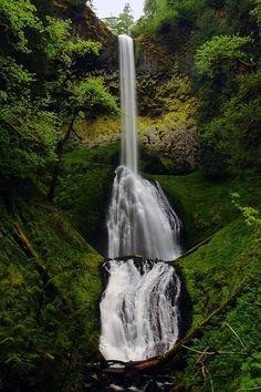 Pup Creek Falls - Mount Hood National Forest, Oregon by   | nature | | amazingnature |  #nature #amazingnature  https://biopop.com/