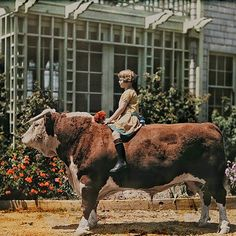 The year 1926: A child sitting on a Hereford bull near Pleasanton California. Flashback 127 years into photographic history as we bring you images from the Natgeo archivessee more at natgeofound.tumblr.com @natgeocreative Photo by Charles Martin by natgeo