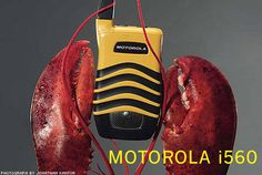 durable plastic coverings that meet military durability standards are used for Motorola's and were inspired by analyzing lobster shells. Natural World, Design Inspiration, Product Design, Shells, Military, Meet, Plastic, Inspired, Style