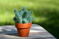Needle Felted Little Succulent Cactus Soft Sculpture. $20.00, via Etsy.