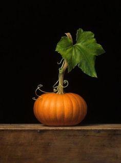 Little pumpkin still life. Art Pastel, Pumpkin Leaves, Pumpkin Pumpkin, Painted Pumpkins, Still Life Photography, Fall Harvest, Autumn Inspiration, Fall Pumpkins, Fruits And Veggies