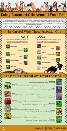 Using Essential Oils Around Your Pets - #OrganicAromas #EssentialOils #Pets
