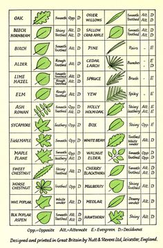 Tree/Leaf Identification. Great for Botany Lesson on Leaves! Print and take with you on your leaf hunt!
