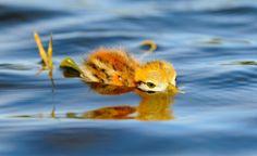 aves caçando ou fazendo um ninho