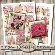Orchid Illustrations Digital Collage Sheet Squares for by DigiBugs Couple Mugs, Couple Gifts, Orchid Images, Crochet Bracelet, Collage Sheet, Digital Collage, Small Businesses, Collages, Squares