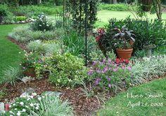 landscape ideas for underneath magnolia tree
