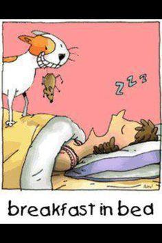 Breakfast in bed - cat humor I Love Cats, Cute Cats, Funny Cats, Funny Animals, Crazy Cat Lady, Crazy Cats, Cat Jokes, Cat Humour, Cat Comics