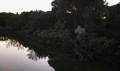 Laguna Algaida- Los Toruños