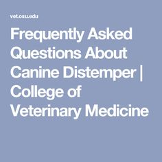 Frequently  Asked Questions About Canine Distemper | College of Veterinary Medicine