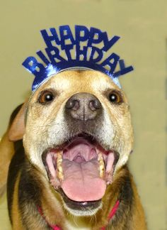 Come join us at the League for Animal Welfare for Conner`s 10th Birthday party May 3rd 11am-5pm. He has been with us since he was a puppy but he hasn`t lost hope of finding that forever home.