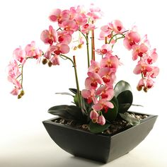 Features:  -Color: Pink.  -Maintenance and allergy free.  -For home or office.  -Assembled in the USA.  Product Type: -Flowers.  Color: -Pink.  Flower: -Orchids.  Container Finish: -Brown. Dimensions: