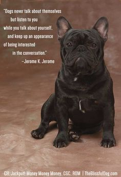"""""""Dogs never talk about themselves but listen to you  while you talk about yourself, and keep up an appearance  of being interested in the conversation.""""     –Jerome K. Jerome  The Blissful Dog Quote of the Day - featuring French Bulldog CH. Jackpot! Money Money Money, ROM< CGC."""